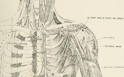 Osteopathy 101: A Brief History